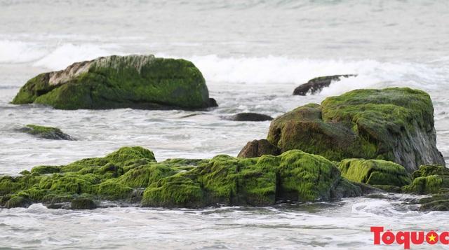 Đẹp ngỡ ngàng mùa rêu xanh tại rạn Nam Ô - Ảnh 16.
