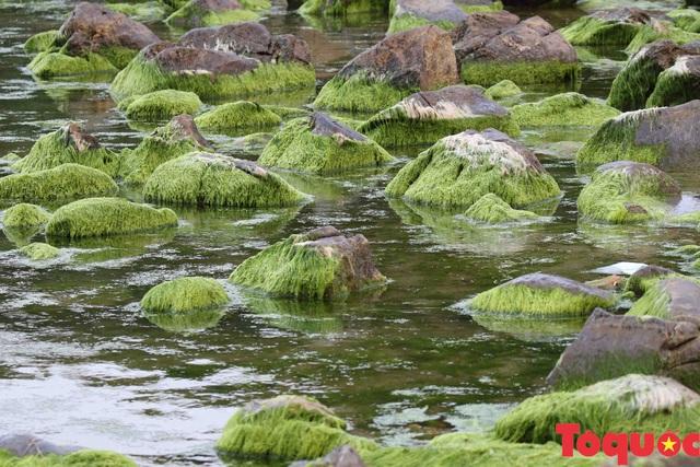 Đẹp ngỡ ngàng mùa rêu xanh tại rạn Nam Ô - Ảnh 6.