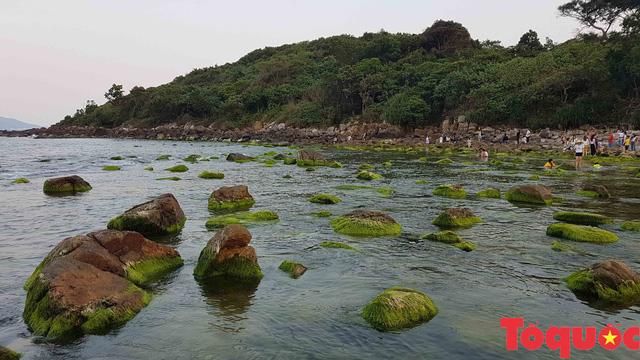 Đẹp ngỡ ngàng mùa rêu xanh tại rạn Nam Ô - Ảnh 15.
