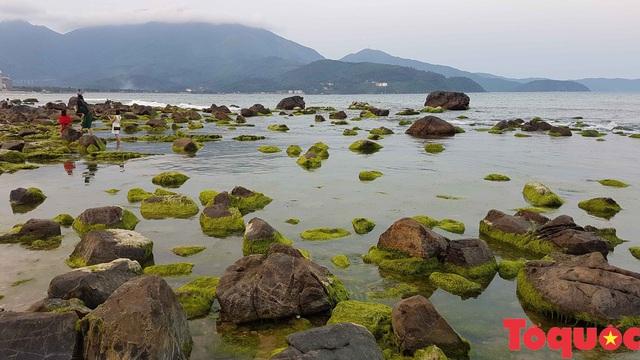 Đẹp ngỡ ngàng mùa rêu xanh tại rạn Nam Ô - Ảnh 17.