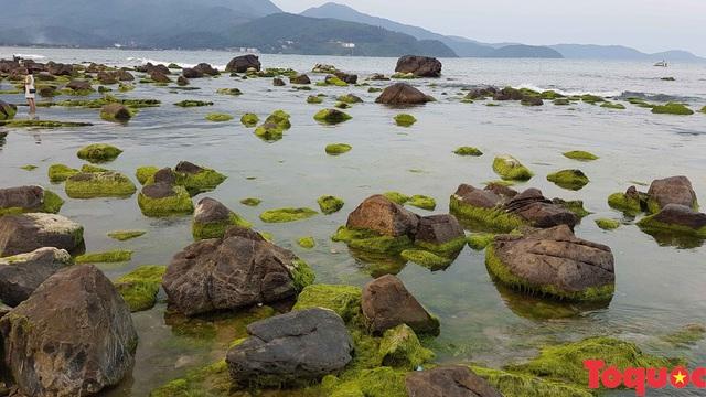Đẹp ngỡ ngàng mùa rêu xanh tại rạn Nam Ô - Ảnh 3.