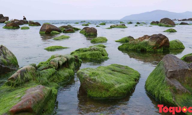Đẹp ngỡ ngàng mùa rêu xanh tại rạn Nam Ô - Ảnh 2.