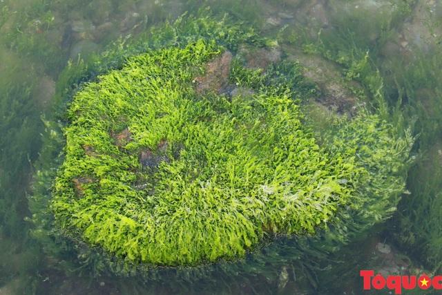 Đẹp ngỡ ngàng mùa rêu xanh tại rạn Nam Ô - Ảnh 4.