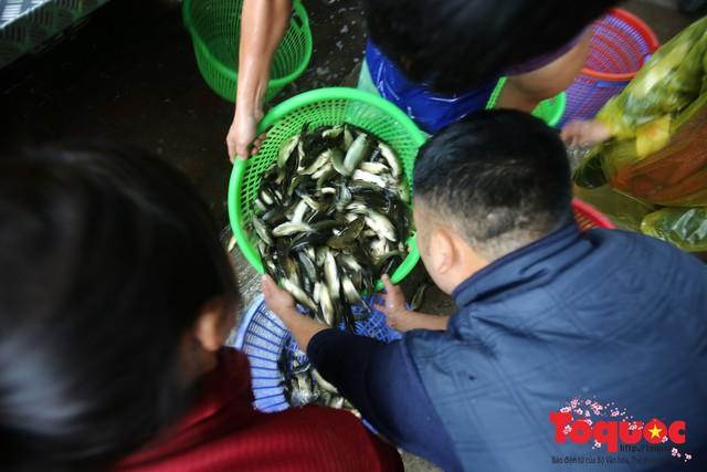 Hà Nội: Hàng vạn người chuyền tay phóng sinh gần 12 tấn cá cầu quốc thái dân an - Ảnh 5.