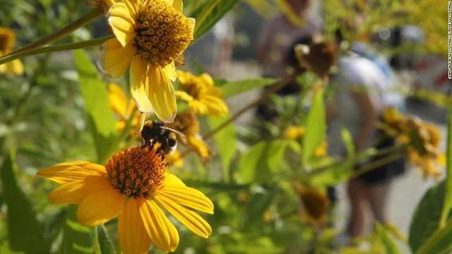 Suy giảm đa dạng côn trùng có thể gây ra hậu quả thảm khốc - Ảnh 1.