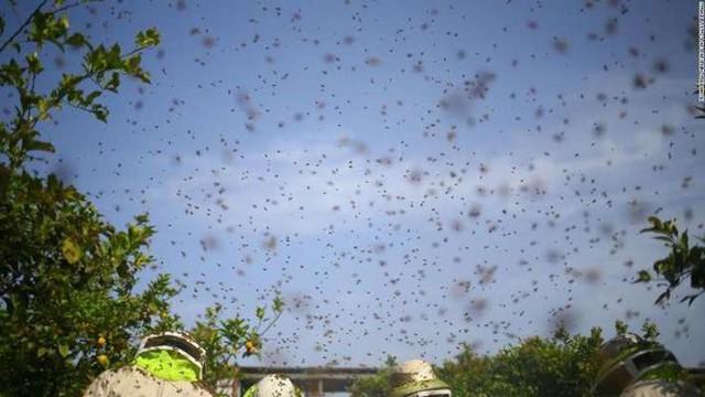 Suy giảm đa dạng côn trùng có thể gây ra hậu quả thảm khốc - Ảnh 2.