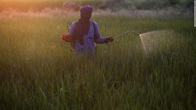 Suy giảm đa dạng côn trùng có thể gây ra hậu quả thảm khốc - Ảnh 5.