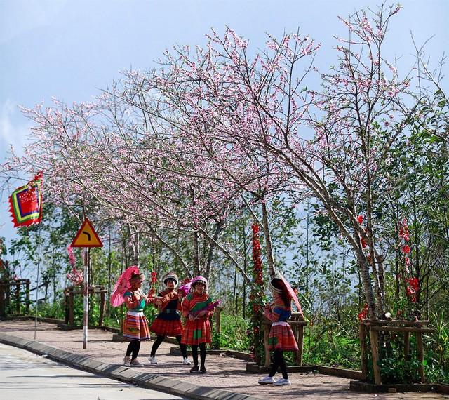 Lạc lối giữa rừng đào bung nở căng tràn nhựa sống ở Sun World Fansipan Legend - Ảnh 2.