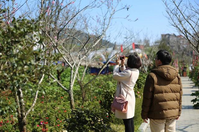 Lạc lối giữa rừng đào bung nở căng tràn nhựa sống ở Sun World Fansipan Legend - Ảnh 6.