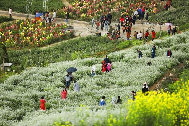 Lạc lối giữa rừng đào bung nở căng tràn nhựa sống ở Sun World Fansipan Legend - Ảnh 9.