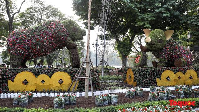 Hà Nội làm heo khổng lồ bằng cây xanh đón Tết Kỷ Hợi 2019 - Ảnh 9.