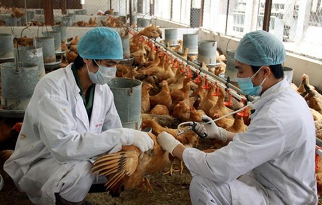 Hai trường hợp nhiễm cúm gia cầm H5N1 trong dịp Tết Nguyên Đán - Ảnh 1.