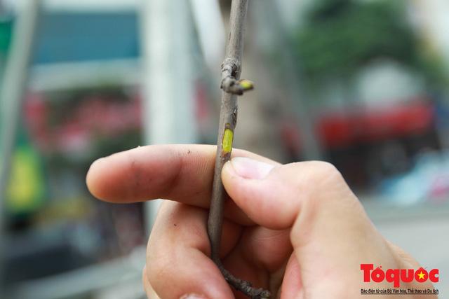 Chủ tịch TP Hà Nội lên tiếng về hàng cây phong trên phố Trần Duy Hưng trơ cành, héo úa - Ảnh 4.