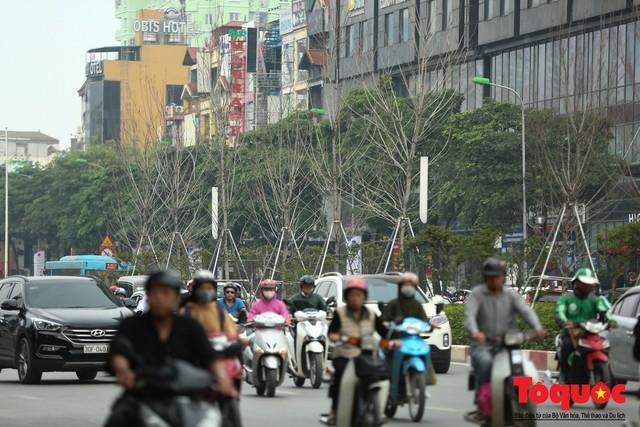 Chủ tịch TP Hà Nội lên tiếng về hàng cây phong trên phố Trần Duy Hưng trơ cành, héo úa - Ảnh 10.