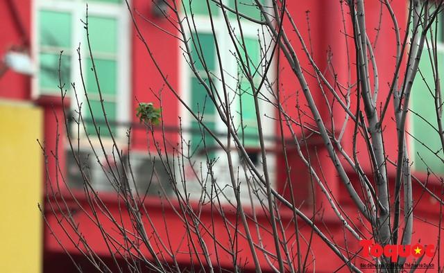 Chủ tịch TP Hà Nội lên tiếng về hàng cây phong trên phố Trần Duy Hưng trơ cành, héo úa - Ảnh 9.
