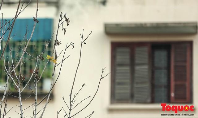 Chủ tịch TP Hà Nội lên tiếng về hàng cây phong trên phố Trần Duy Hưng trơ cành, héo úa - Ảnh 7.