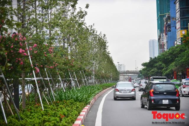 Chủ tịch TP Hà Nội lên tiếng về hàng cây phong trên phố Trần Duy Hưng trơ cành, héo úa - Ảnh 11.