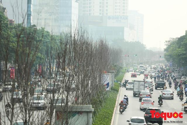 Chủ tịch TP Hà Nội lên tiếng về hàng cây phong trên phố Trần Duy Hưng trơ cành, héo úa - Ảnh 2.