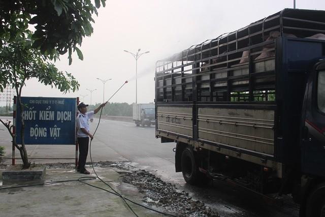 Dịch tả lợn Châu Phi xuất hiện tại Thừa Thiên Huế - Ảnh 1.