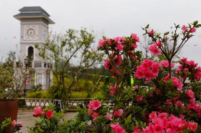 Nhiều hoạt động hấp dẫn tại Lễ hội hoa đỗ quyên lần thứ 3  - Ảnh 1.