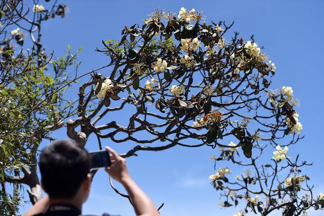 Nhiều hoạt động hấp dẫn tại Lễ hội hoa đỗ quyên lần thứ 3  - Ảnh 8.