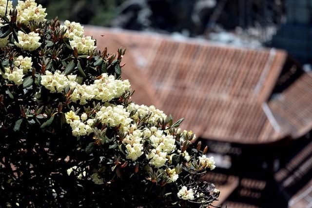Nhiều hoạt động hấp dẫn tại Lễ hội hoa đỗ quyên lần thứ 3  - Ảnh 5.