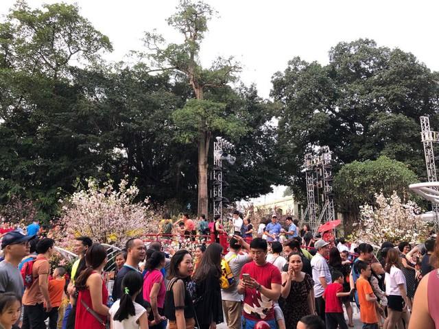 Khách thích thú với trải nghiệm tại lễ hội hoa anh đào ở Hà Nội - Ảnh 2.