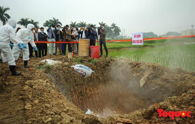 Hà Nội diễn tập ứng phó khẩn cấp với dịch tả lợn Châu Phi - Ảnh 17.