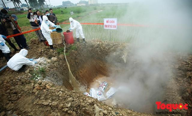 Hà Nội diễn tập ứng phó khẩn cấp với dịch tả lợn Châu Phi - Ảnh 18.