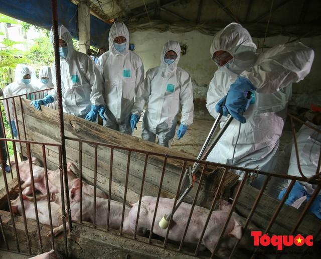 Hà Nội diễn tập ứng phó khẩn cấp với dịch tả lợn Châu Phi - Ảnh 6.
