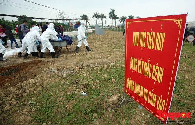 Hà Nội diễn tập ứng phó khẩn cấp với dịch tả lợn Châu Phi - Ảnh 16.