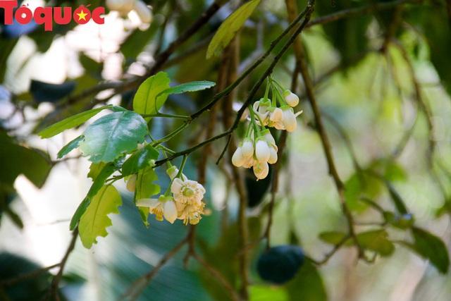 Du khách thích thú trải nghiệm thủ phủ thanh trà xứ Huế mùa trổ hoa - Ảnh 8.