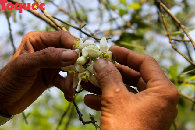 Du khách thích thú trải nghiệm thủ phủ thanh trà xứ Huế mùa trổ hoa - Ảnh 13.
