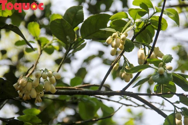 Du khách thích thú trải nghiệm thủ phủ thanh trà xứ Huế mùa trổ hoa - Ảnh 6.