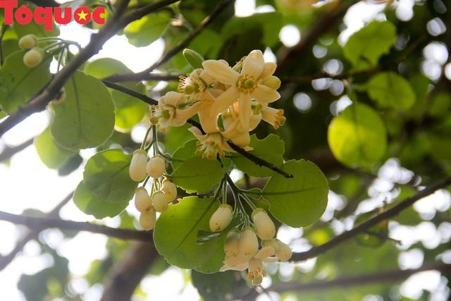 Du khách thích thú trải nghiệm thủ phủ thanh trà xứ Huế mùa trổ hoa - Ảnh 7.