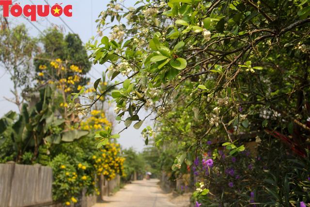 Du khách thích thú trải nghiệm thủ phủ thanh trà xứ Huế mùa trổ hoa - Ảnh 11.