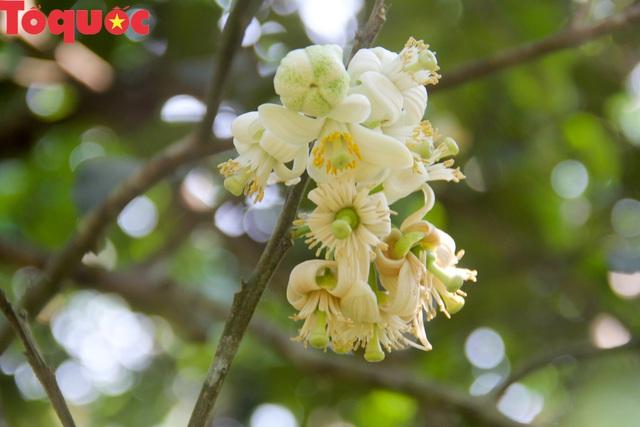 Du khách thích thú trải nghiệm thủ phủ thanh trà xứ Huế mùa trổ hoa - Ảnh 5.