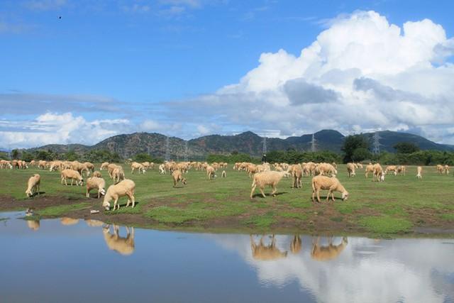 Check-in đồng cừu, điểm du lịch hot của các bạn trẻ hiện nay - Ảnh 3.