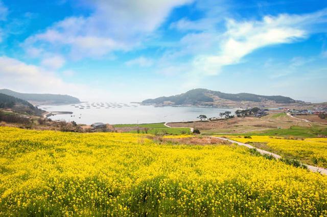 Những điểm đến đầy thu hút trong tiết trời xuân tại Hàn Quốc - Ảnh 1.