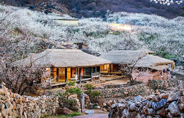 Những điểm đến đầy thu hút trong tiết trời xuân tại Hàn Quốc - Ảnh 10.