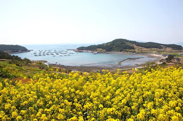 Những điểm đến đầy thu hút trong tiết trời xuân tại Hàn Quốc - Ảnh 11.