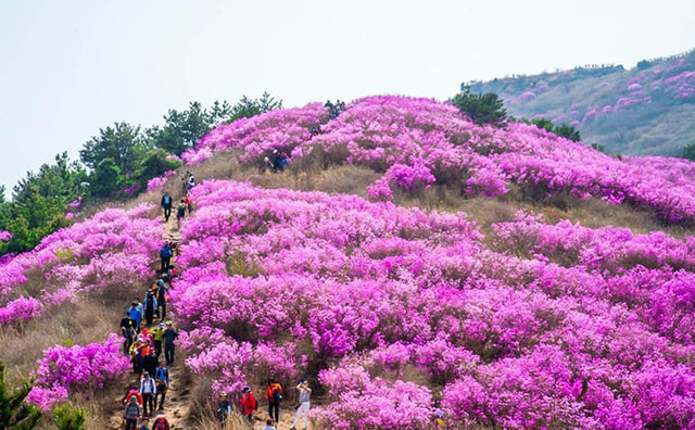 Những điểm đến đầy thu hút trong tiết trời xuân tại Hàn Quốc - Ảnh 13.