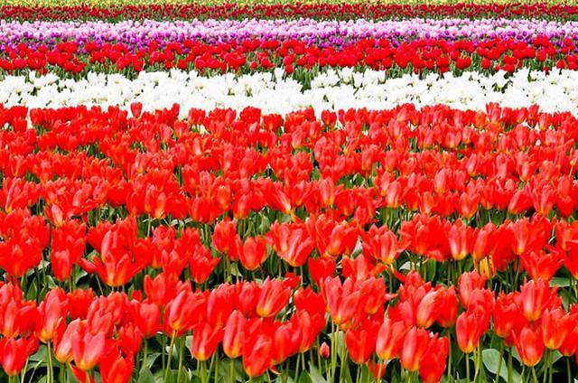 Những điểm đến đầy thu hút trong tiết trời xuân tại Hàn Quốc - Ảnh 15.