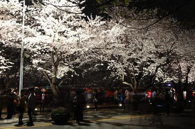 Những điểm đến đầy thu hút trong tiết trời xuân tại Hàn Quốc - Ảnh 2.