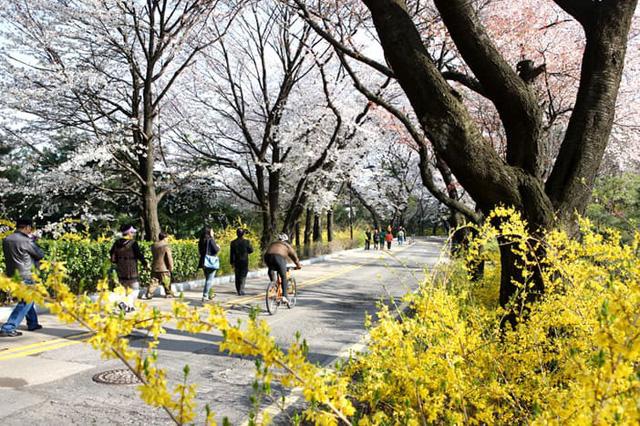 Những điểm đến đầy thu hút trong tiết trời xuân tại Hàn Quốc - Ảnh 3.