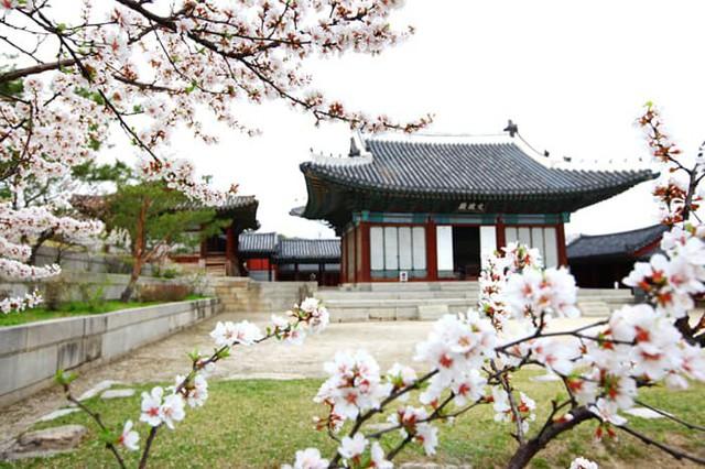 Những điểm đến đầy thu hút trong tiết trời xuân tại Hàn Quốc - Ảnh 4.