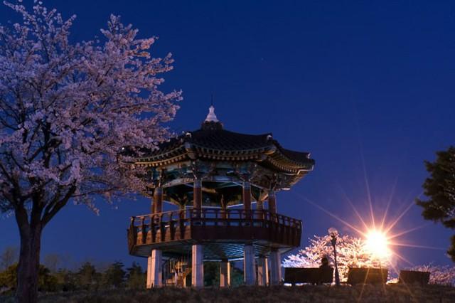 Những điểm đến đầy thu hút trong tiết trời xuân tại Hàn Quốc - Ảnh 6.