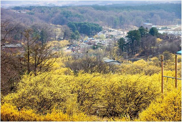 Những điểm đến đầy thu hút trong tiết trời xuân tại Hàn Quốc - Ảnh 7.