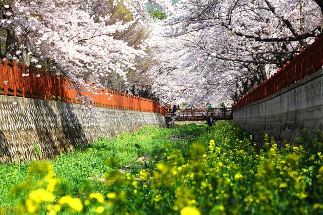 Những điểm đến đầy thu hút trong tiết trời xuân tại Hàn Quốc - Ảnh 8.