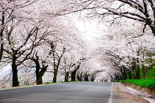 Những điểm đến đầy thu hút trong tiết trời xuân tại Hàn Quốc - Ảnh 9.